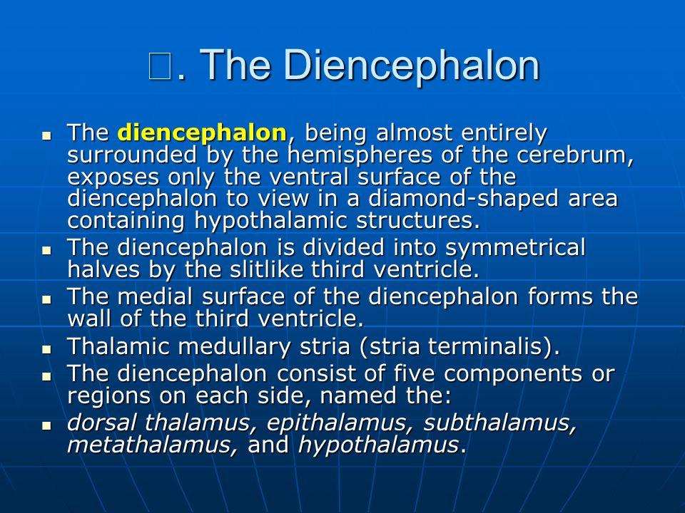 Ⅲ. The Diencephalon