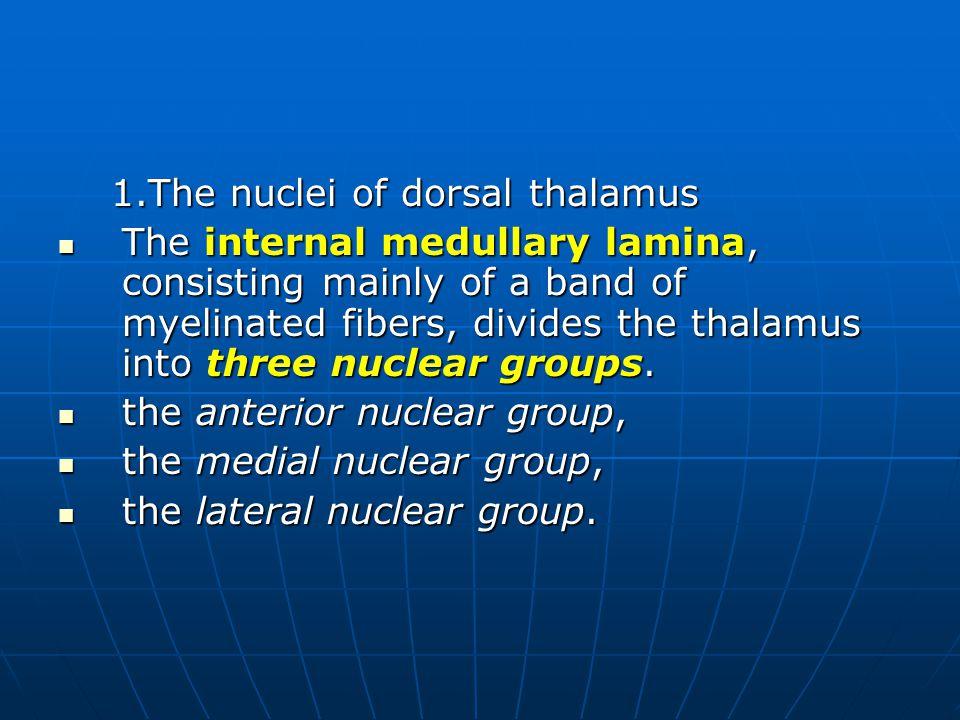 1.The nuclei of dorsal thalamus
