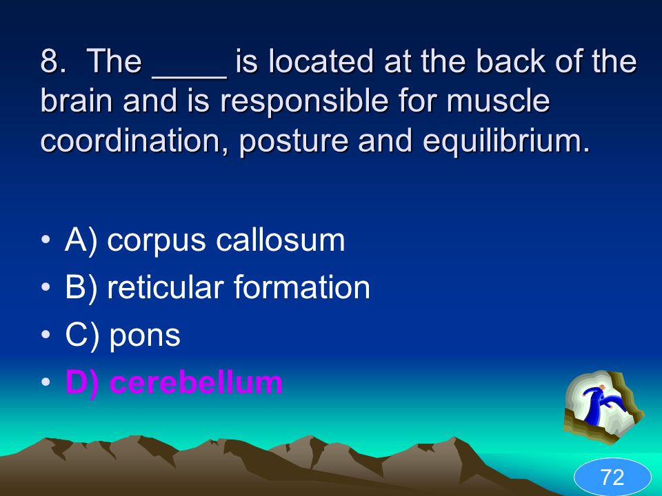 B) reticular formation C) pons D) cerebellum