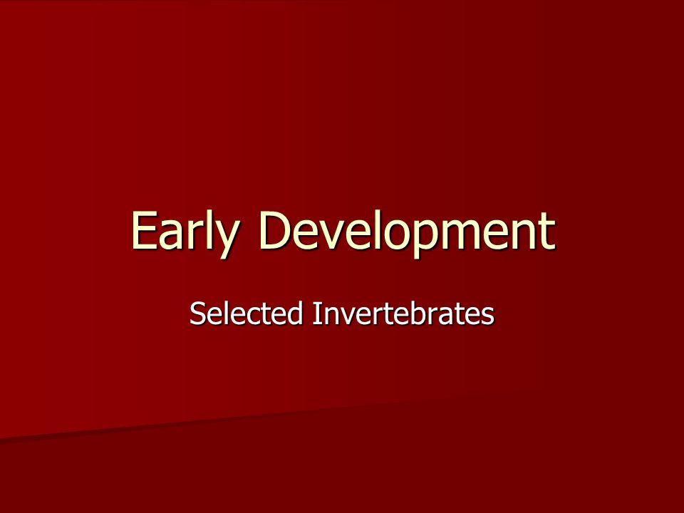 Selected Invertebrates