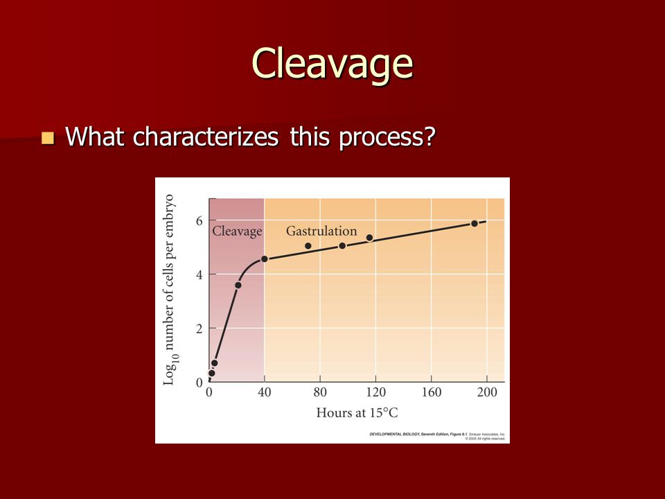 Cleavage What characterizes this process