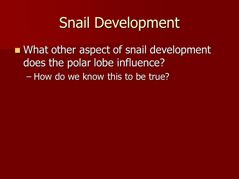 Snail Development What other aspect of snail development does the polar lobe influence How do we know this to be true