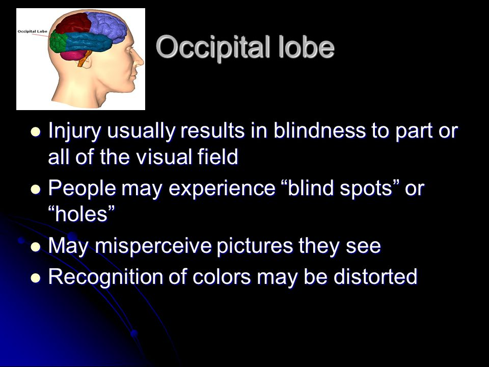 Occipital lobe Injury usually results in blindness to part or all of the visual field. People may experience blind spots or holes