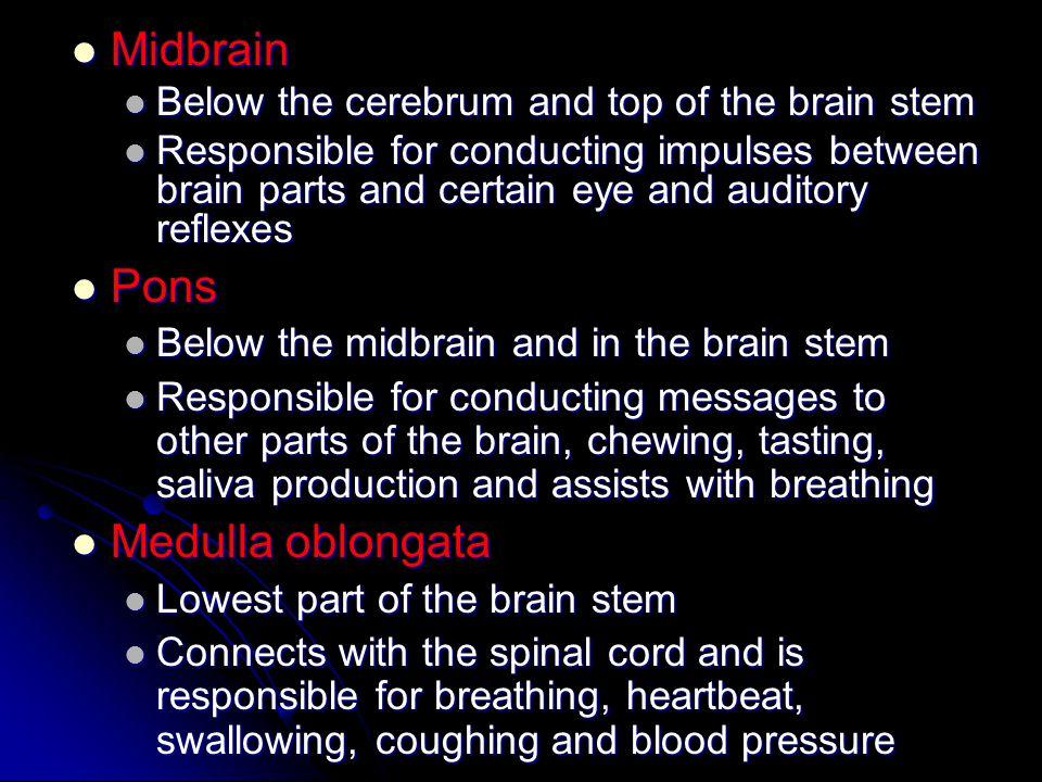 Midbrain Pons Medulla oblongata