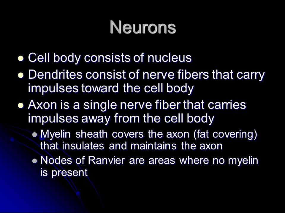 Neurons Cell body consists of nucleus
