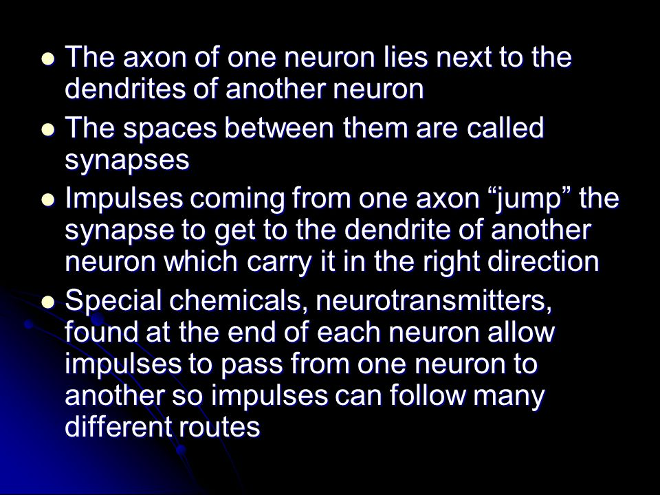 The axon of one neuron lies next to the dendrites of another neuron