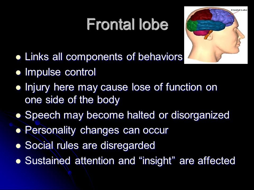 Frontal lobe Links all components of behaviors Impulse control