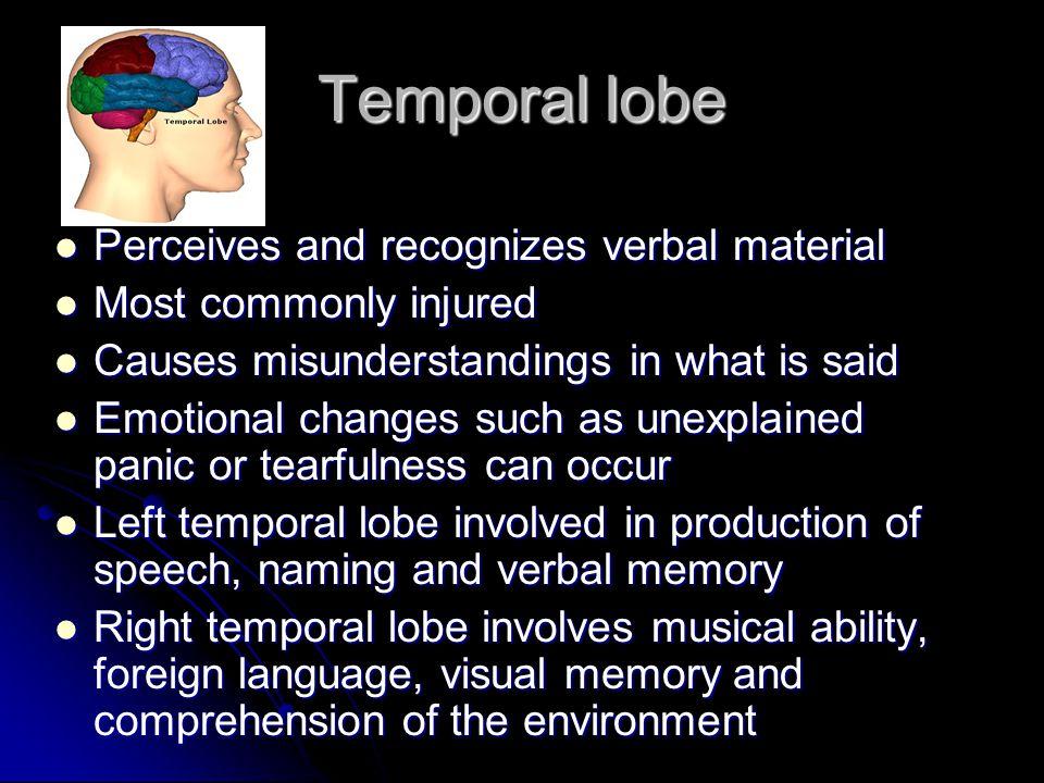Temporal lobe Perceives and recognizes verbal material
