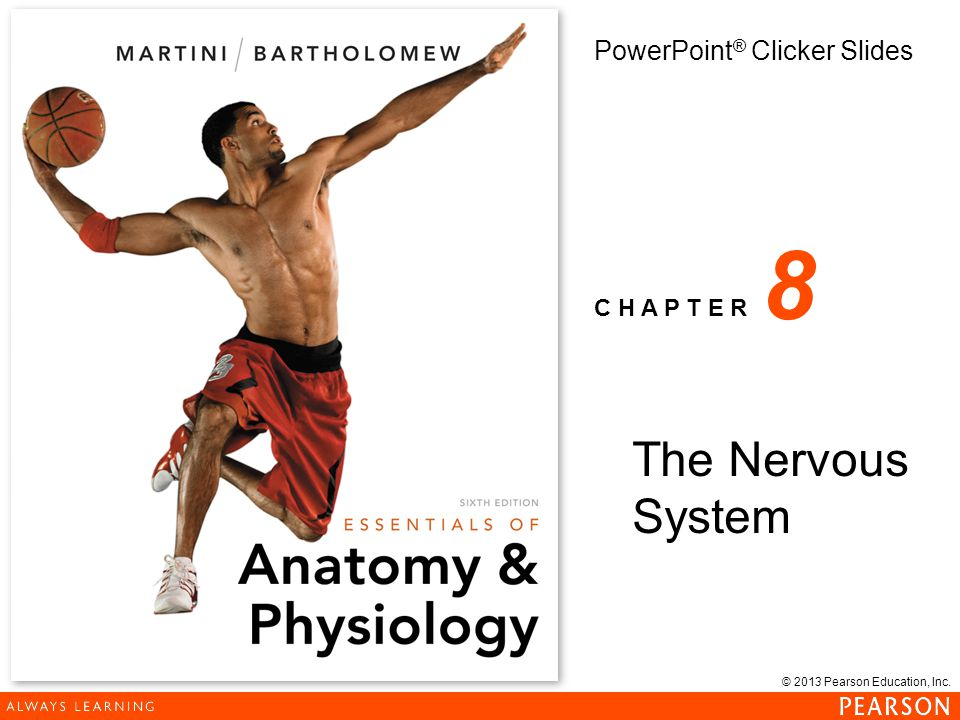 8 The Nervous System