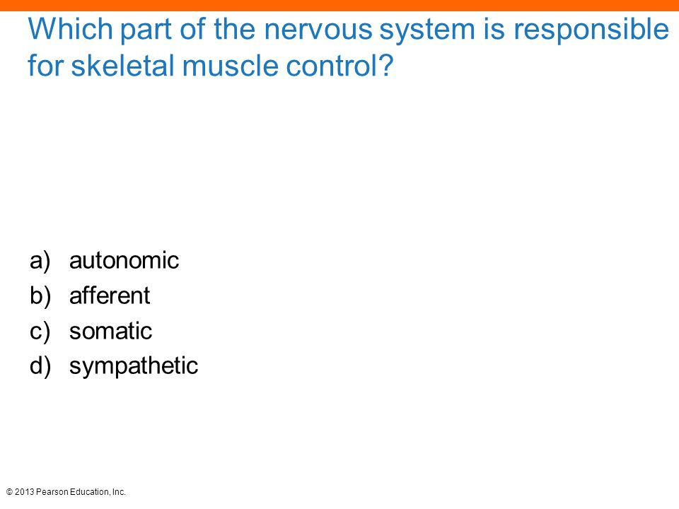 Which part of the nervous system is responsible for skeletal muscle control