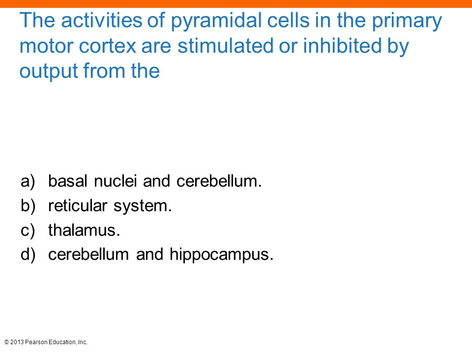 The activities of pyramidal cells in the primary motor cortex are stimulated or inhibited by output from the