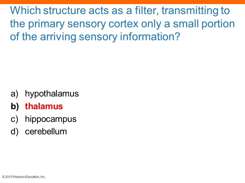 Which structure acts as a filter, transmitting to the primary sensory cortex only a small portion of the arriving sensory information