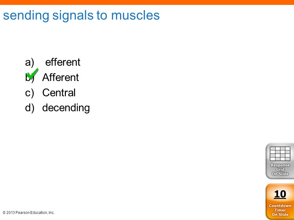 sending signals to muscles