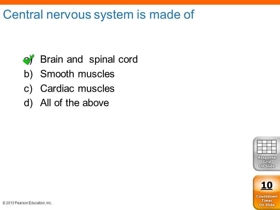 Central nervous system is made of