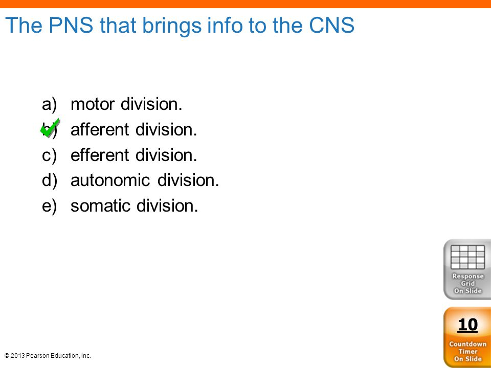 The PNS that brings info to the CNS