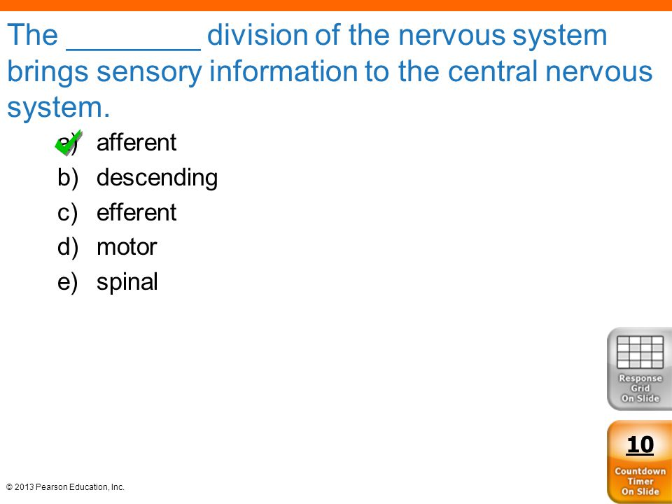 The ________ division of the nervous system brings sensory information to the central nervous system.