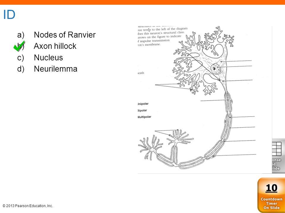 ID Nodes of Ranvier Axon hillock Nucleus Neurilemma 10