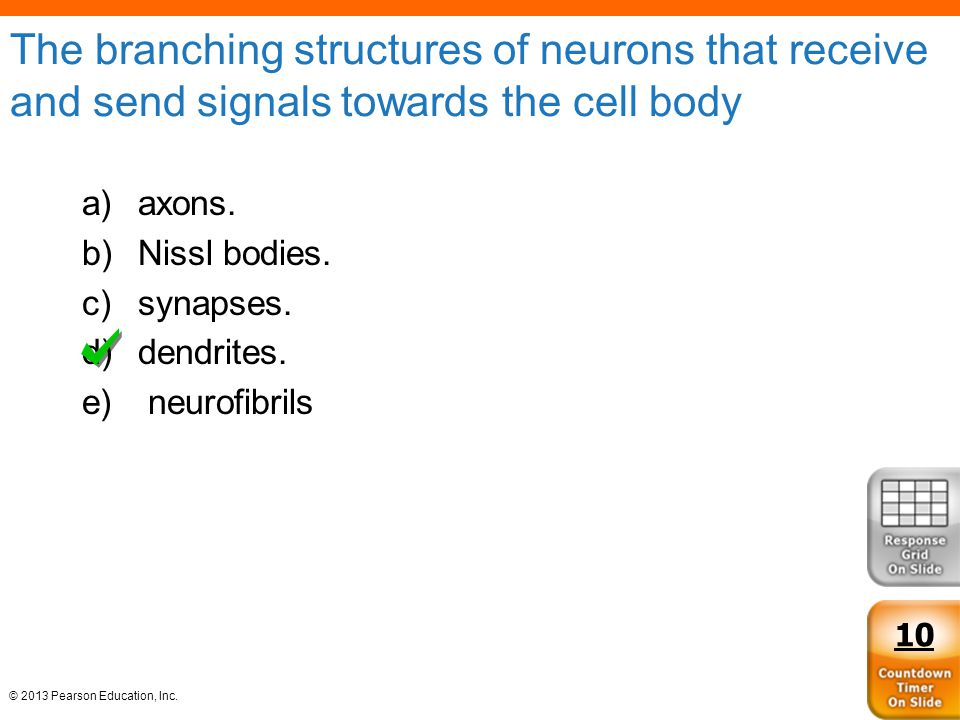 The branching structures of neurons that receive and send signals towards the cell body