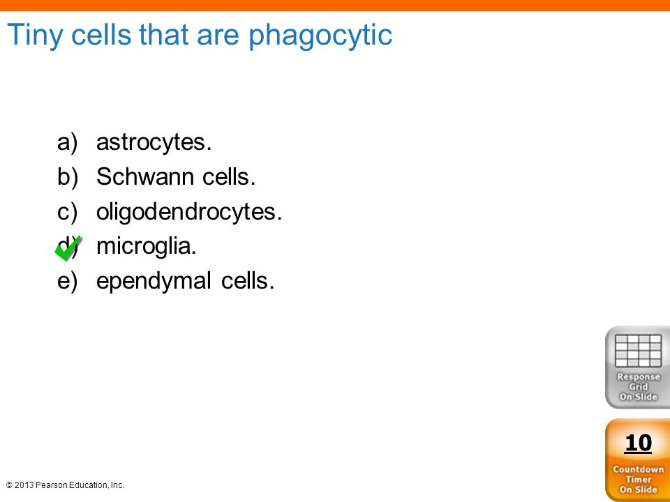 Tiny cells that are phagocytic