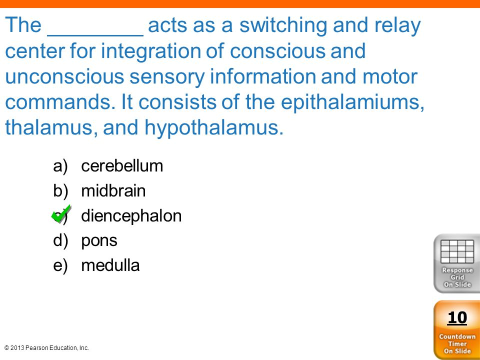 The ________ acts as a switching and relay center for integration of conscious and unconscious sensory information and motor commands. It consists of the epithalamiums, thalamus, and hypothalamus.