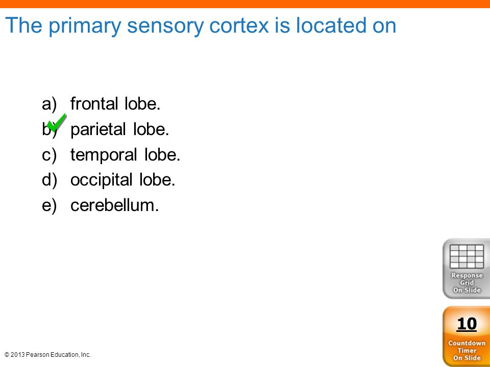 The primary sensory cortex is located on