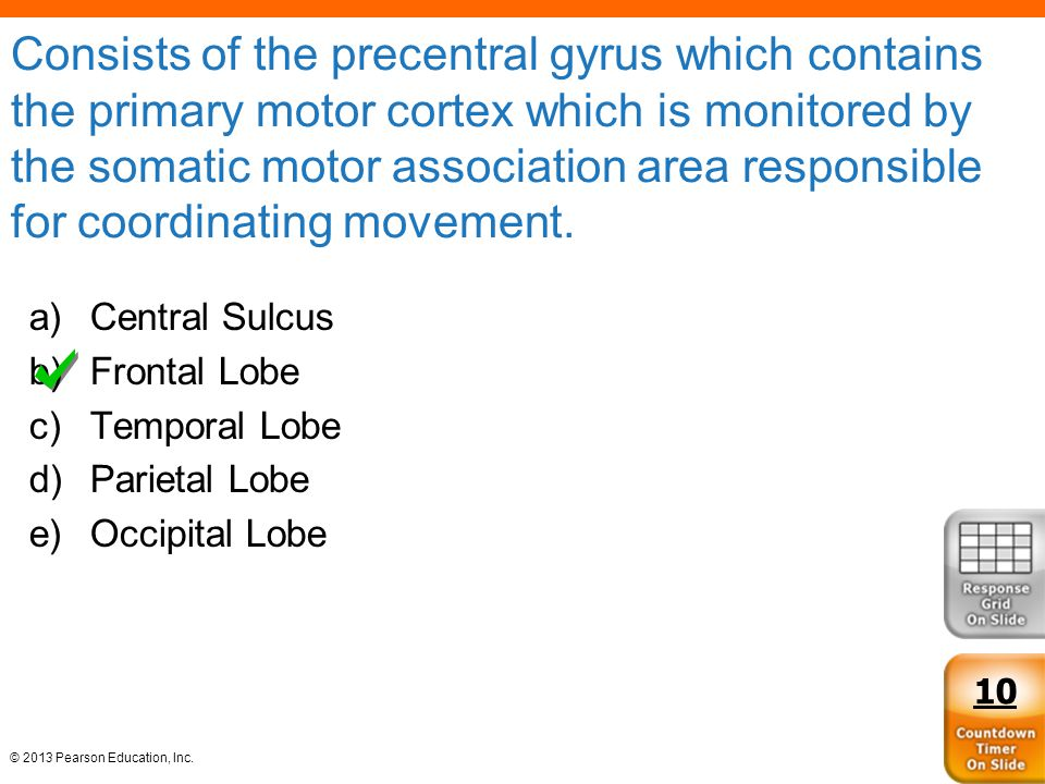 Consists of the precentral gyrus which contains the primary motor cortex which is monitored by the somatic motor association area responsible for coordinating movement.