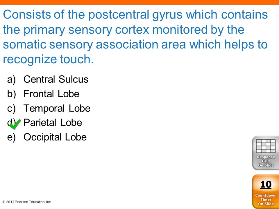 Consists of the postcentral gyrus which contains the primary sensory cortex monitored by the somatic sensory association area which helps to recognize touch.