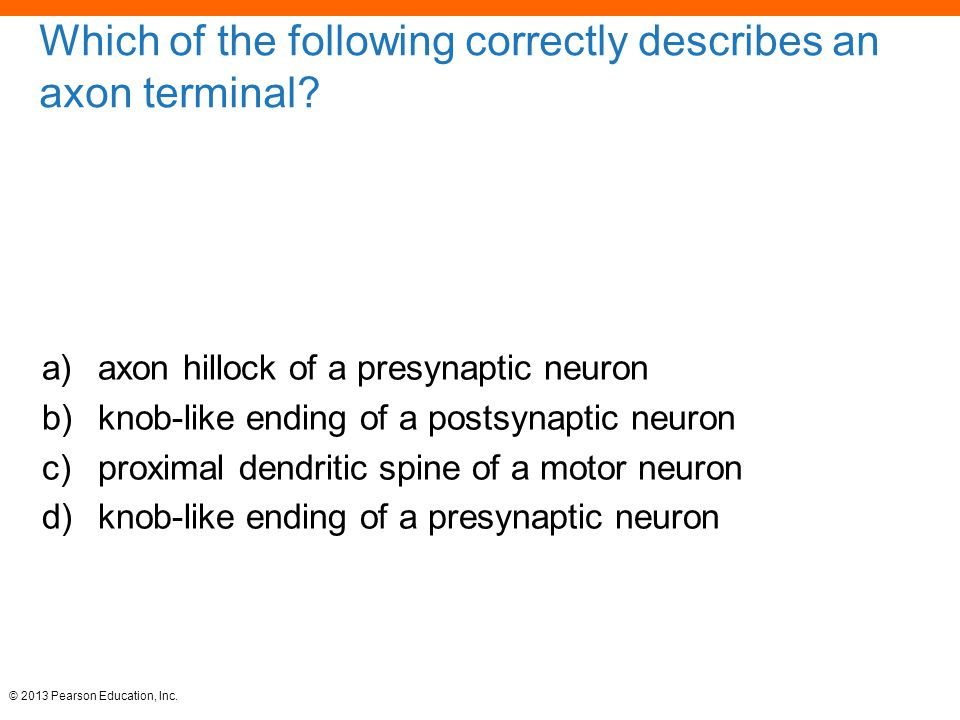 Which of the following correctly describes an axon terminal
