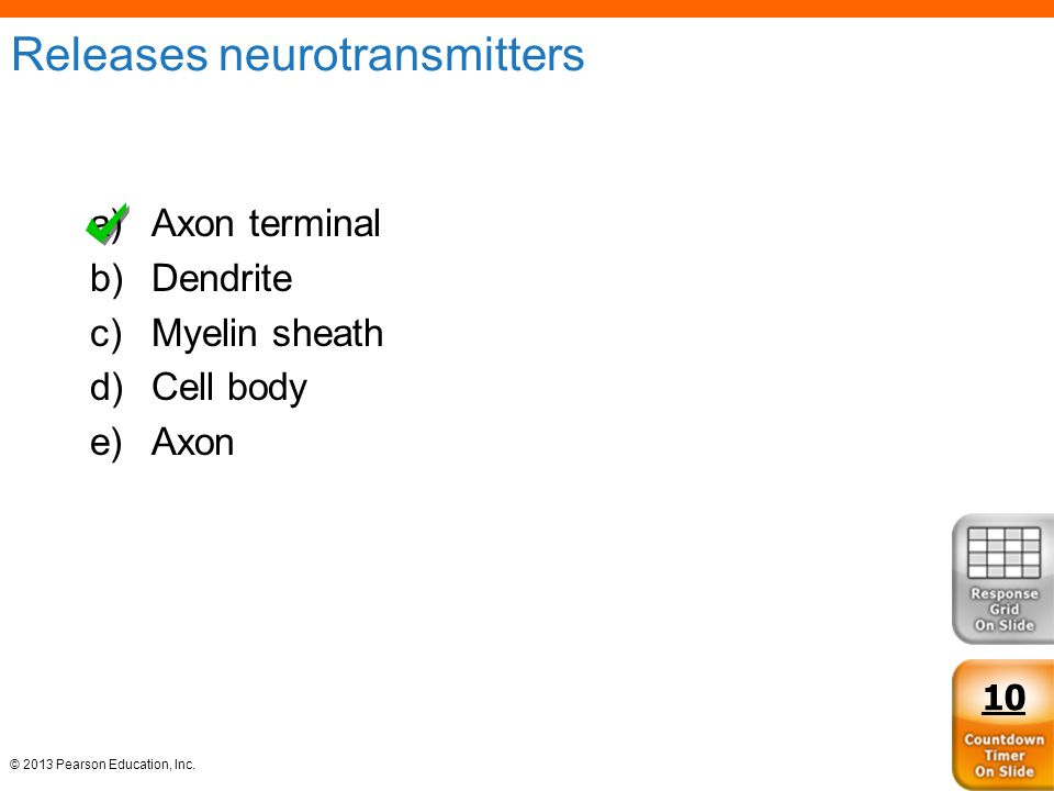 Releases neurotransmitters
