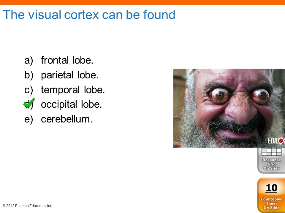 The visual cortex can be found
