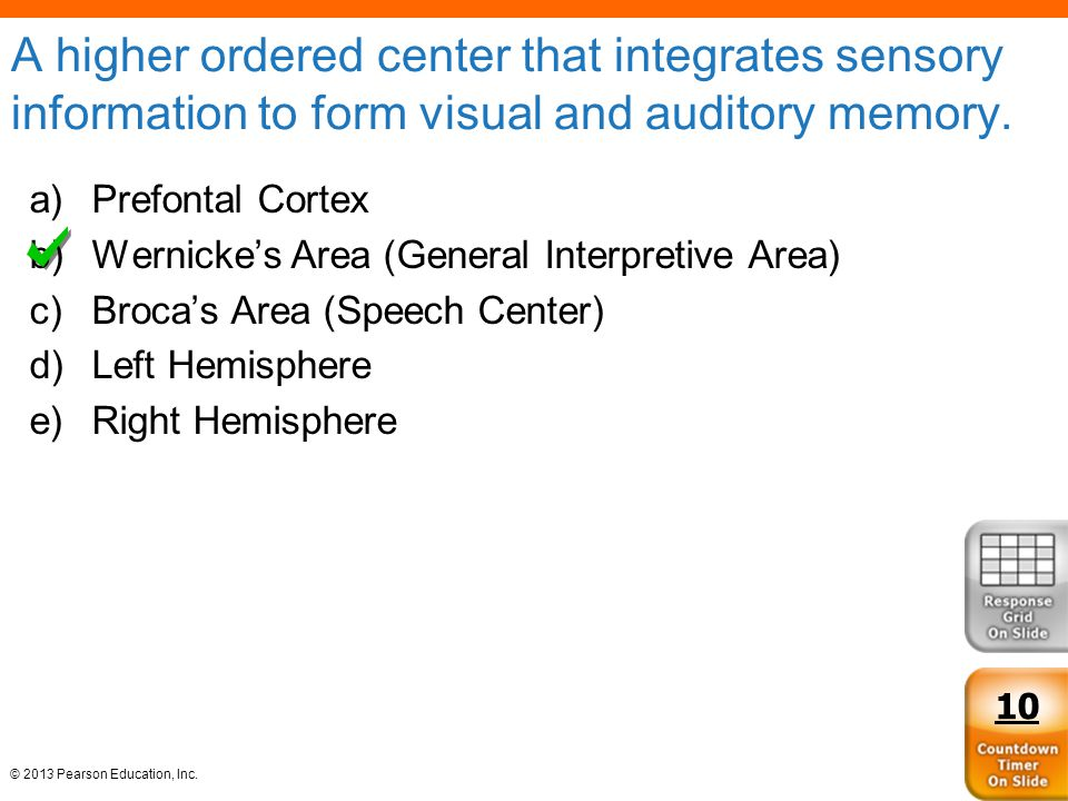 A higher ordered center that integrates sensory information to form visual and auditory memory.