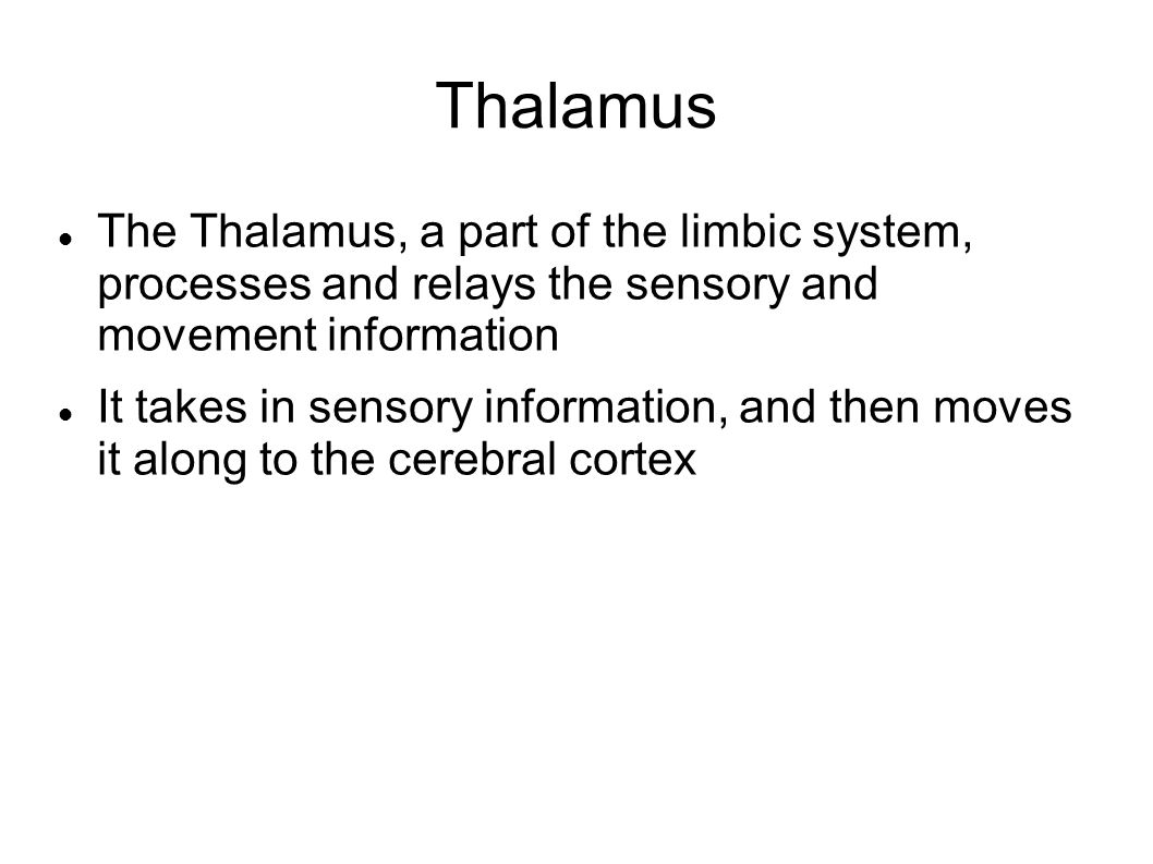 Thalamus The Thalamus, a part of the limbic system, processes and relays the sensory and movement information.