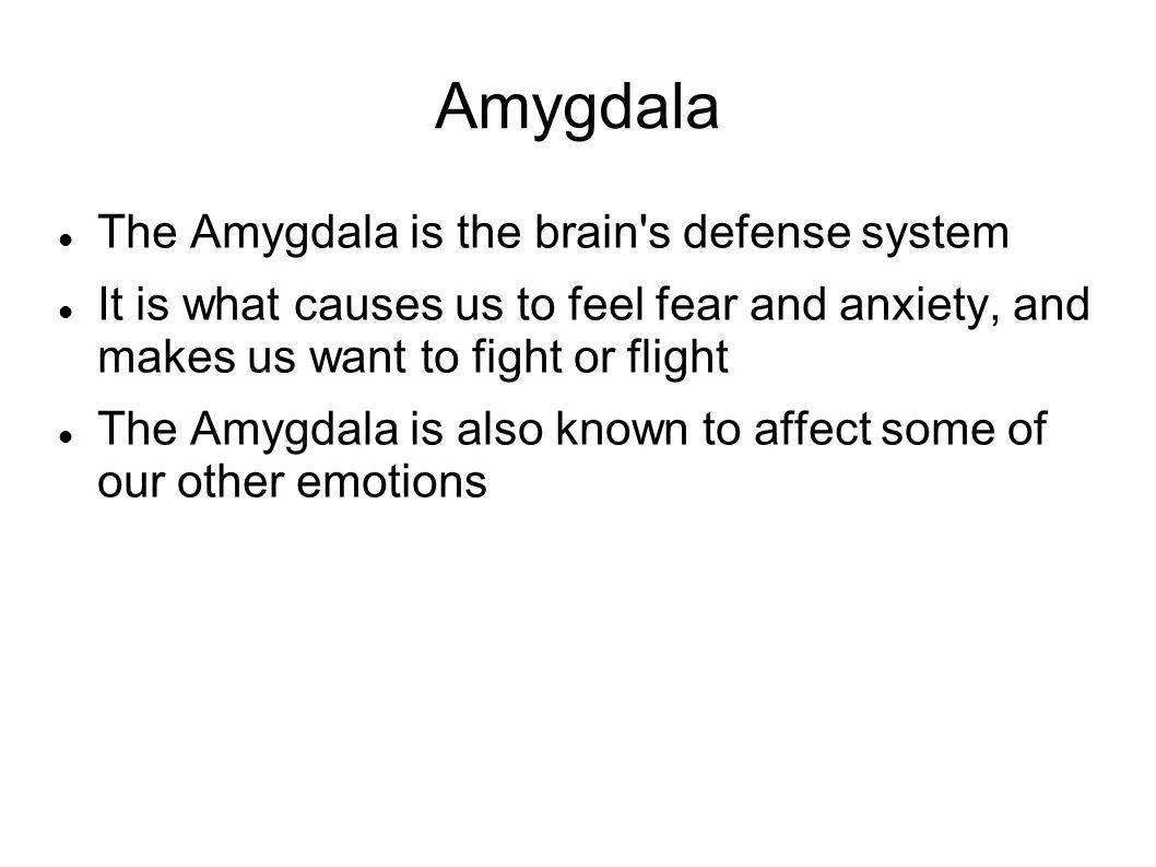 Amygdala The Amygdala is the brain s defense system