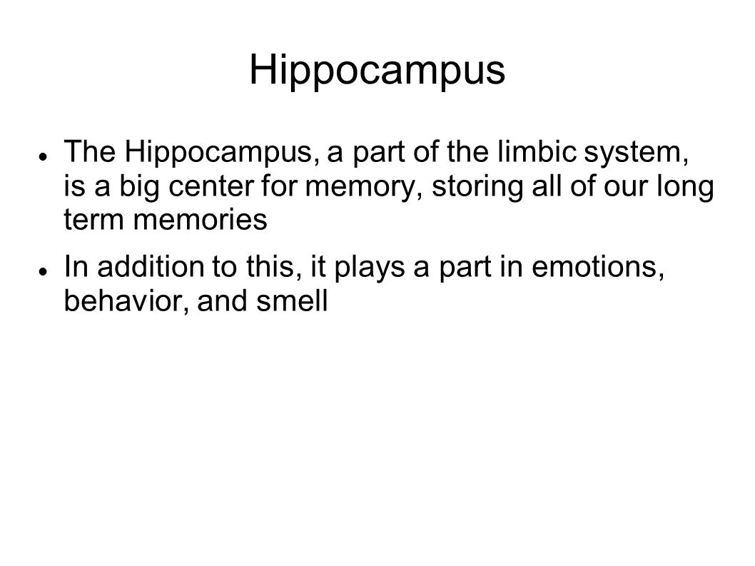 Hippocampus The Hippocampus, a part of the limbic system, is a big center for memory, storing all of our long term memories.