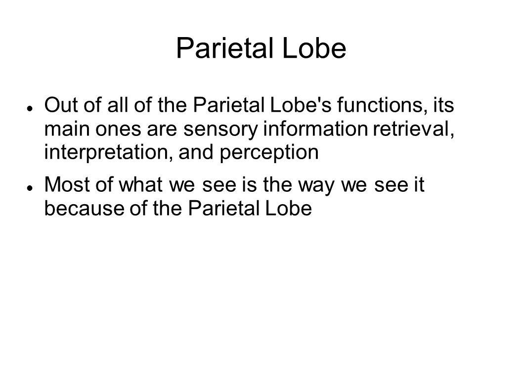 Parietal Lobe Out of all of the Parietal Lobe s functions, its main ones are sensory information retrieval, interpretation, and perception.