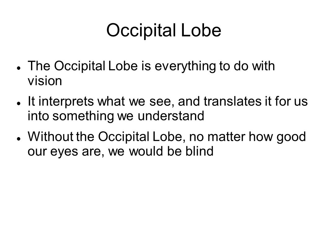 Occipital Lobe The Occipital Lobe is everything to do with vision