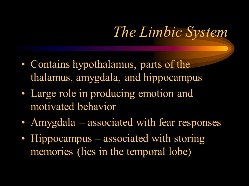 The Limbic System Contains hypothalamus, parts of the thalamus, amygdala, and hippocampus. Large role in producing emotion and motivated behavior.