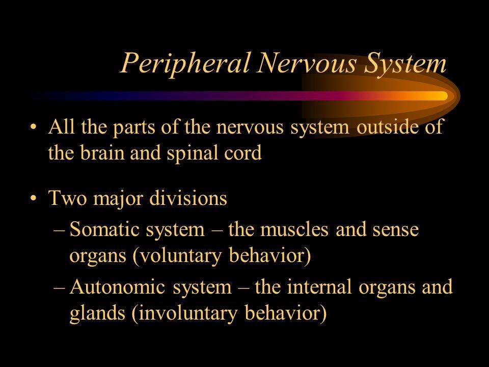 Peripheral Nervous System