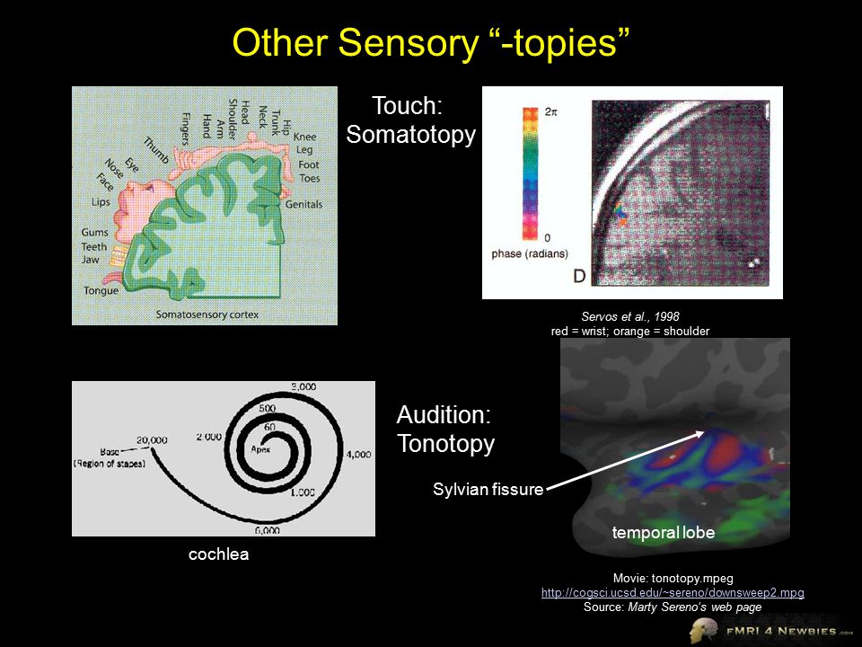 Other Sensory -topies