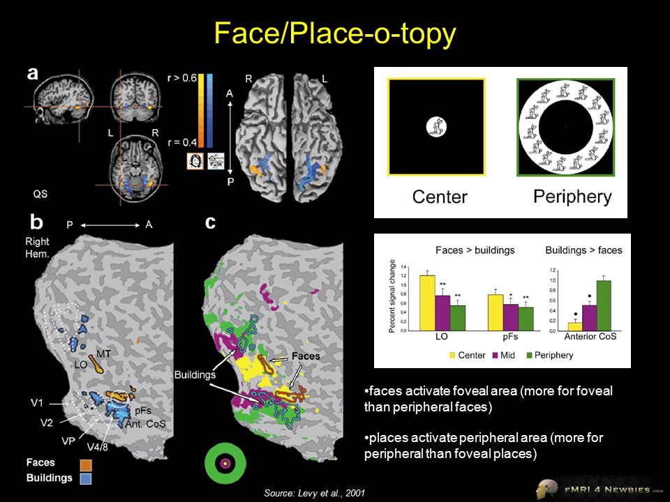 Face/Place-o-topy faces activate foveal area (more for foveal than peripheral faces)