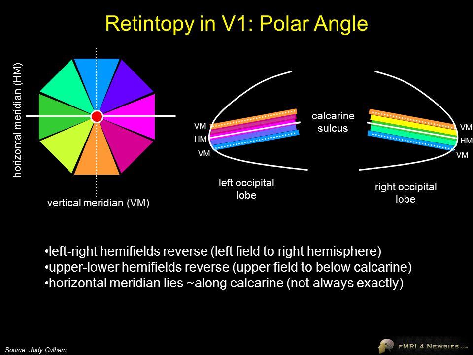 Retintopy in V1: Polar Angle