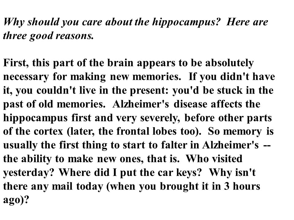 Why should you care about the hippocampus Here are three good reasons.