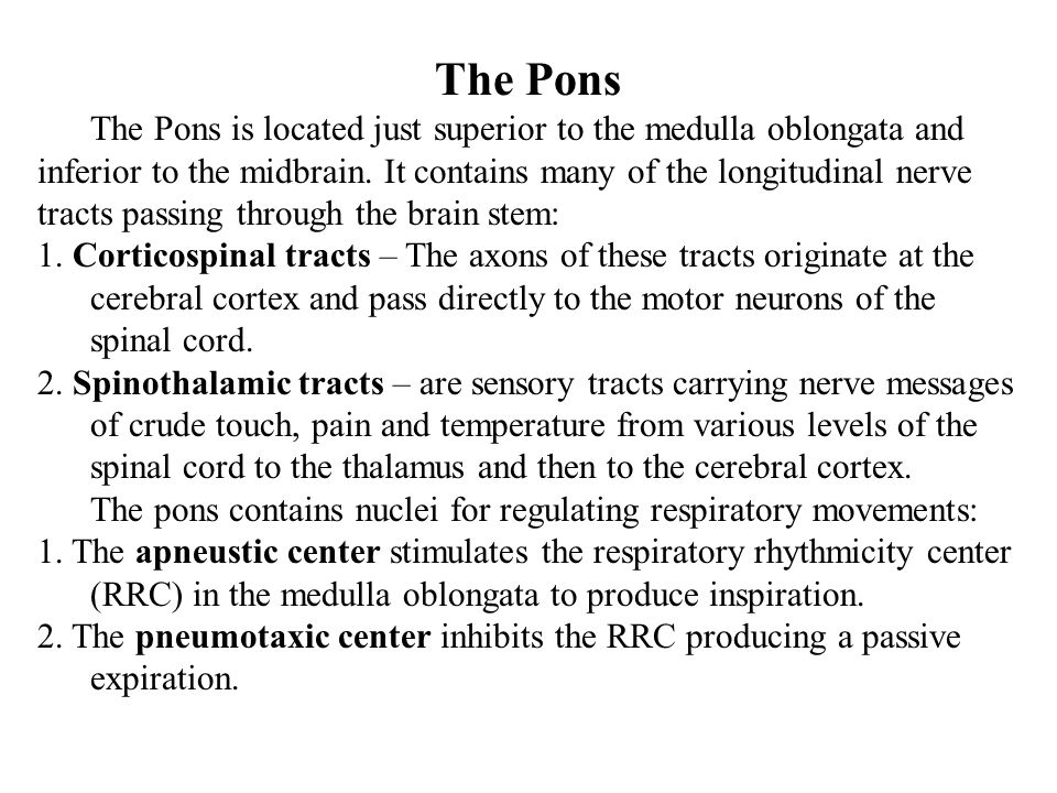 The Pons The Pons is located just superior to the medulla oblongata and. inferior to the midbrain. It contains many of the longitudinal nerve.