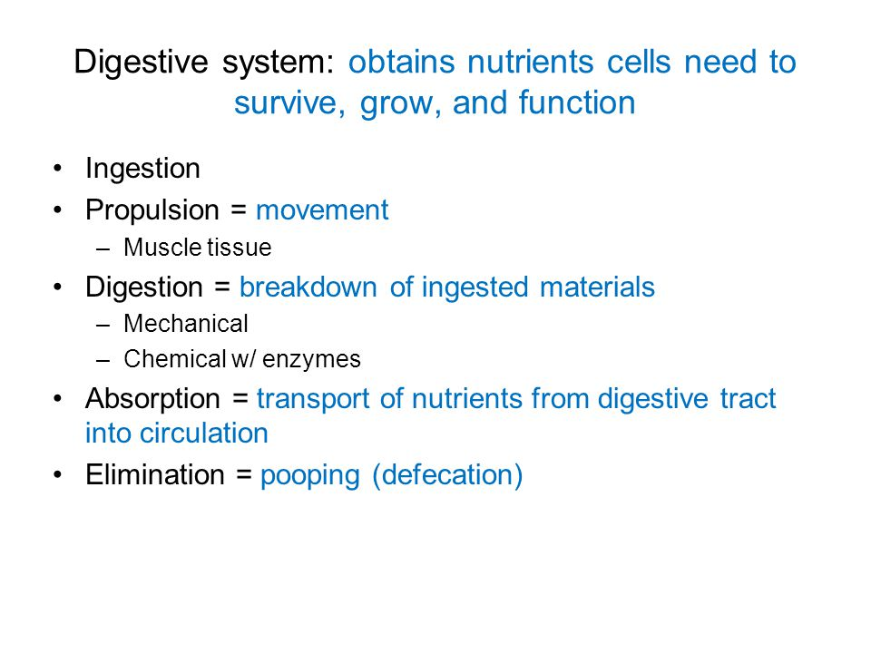 Digestive system: obtains nutrients cells need to survive, grow, and function