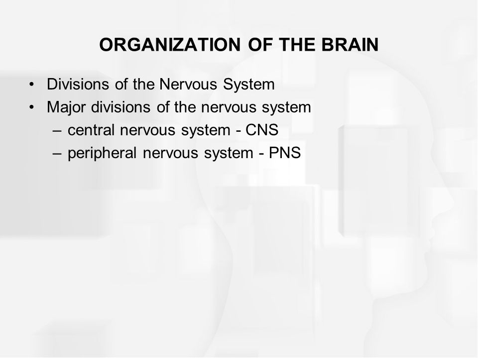 ORGANIZATION OF THE BRAIN