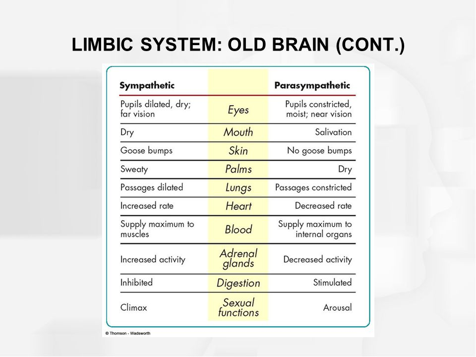 LIMBIC SYSTEM: OLD BRAIN (CONT.)