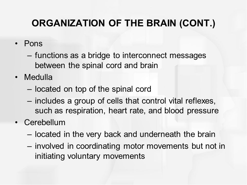 ORGANIZATION OF THE BRAIN (CONT.)