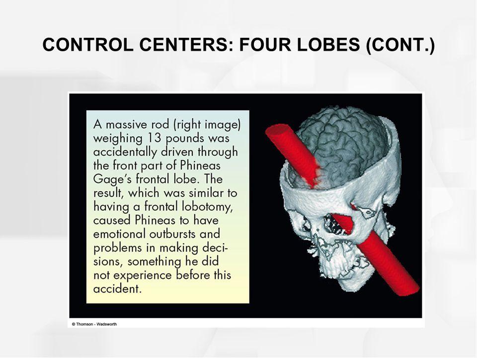 CONTROL CENTERS: FOUR LOBES (CONT.)