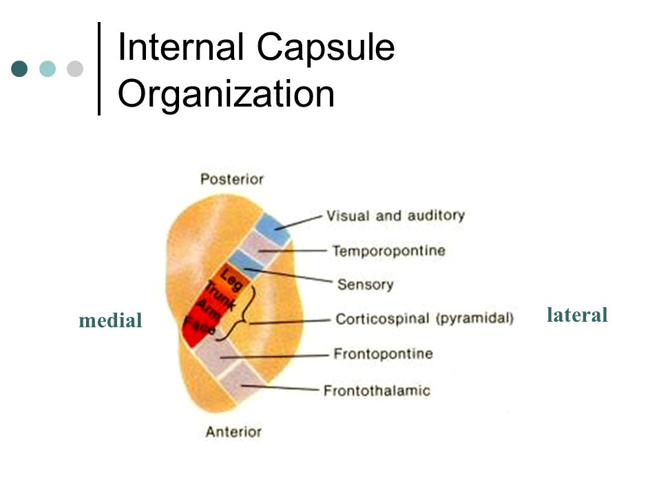 Internal Capsule Organization