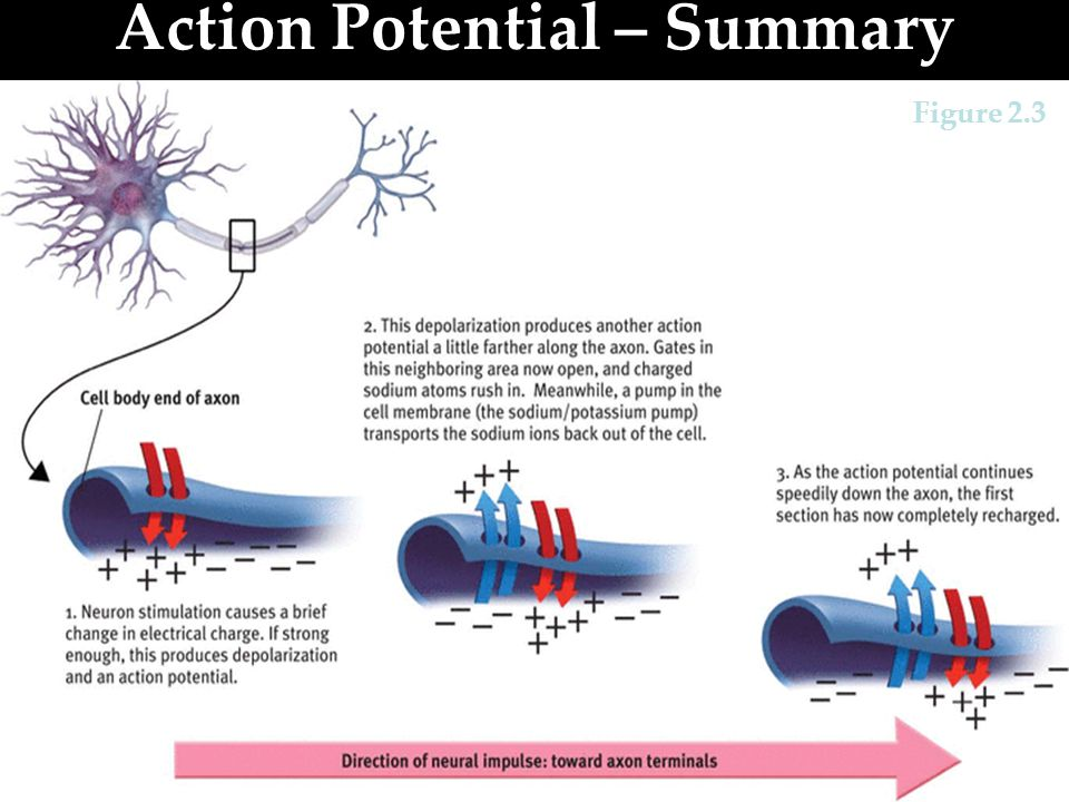 Action Potential – Summary